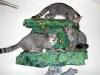 Дикие кошки Геленджика