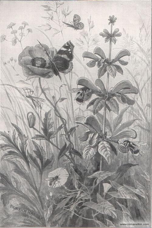 Насекомые, как посредники при оплодотворении цветов