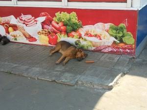 Собака наелась сосисок Останкино
