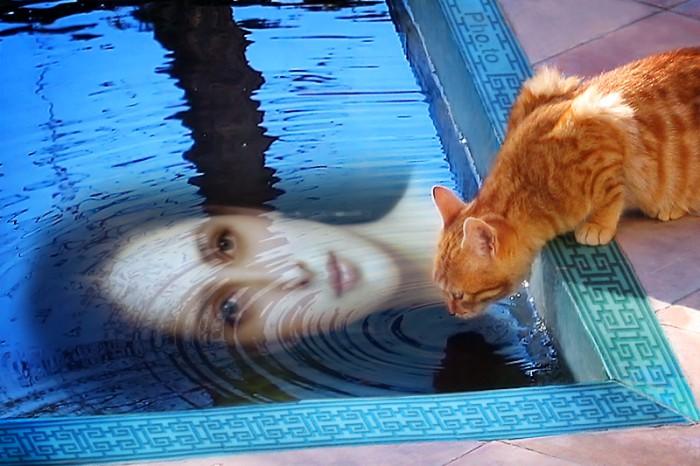 Мама и кошки